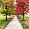 campus outside sidewalk lined with trees